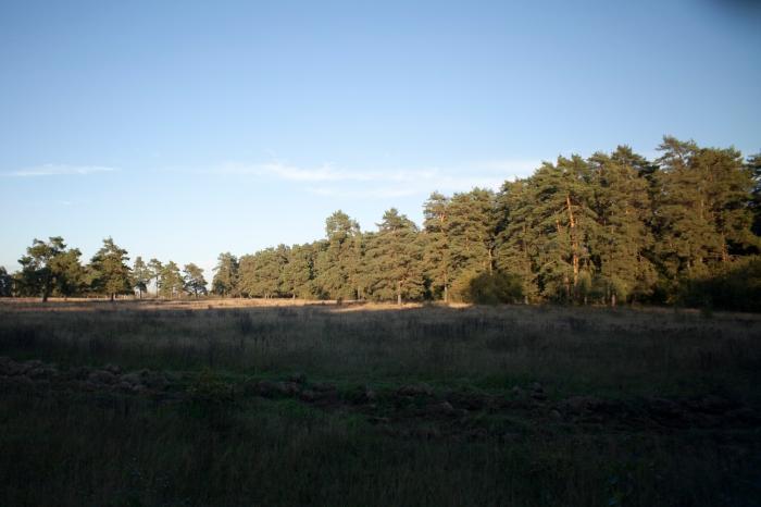 Видновский лесопарк