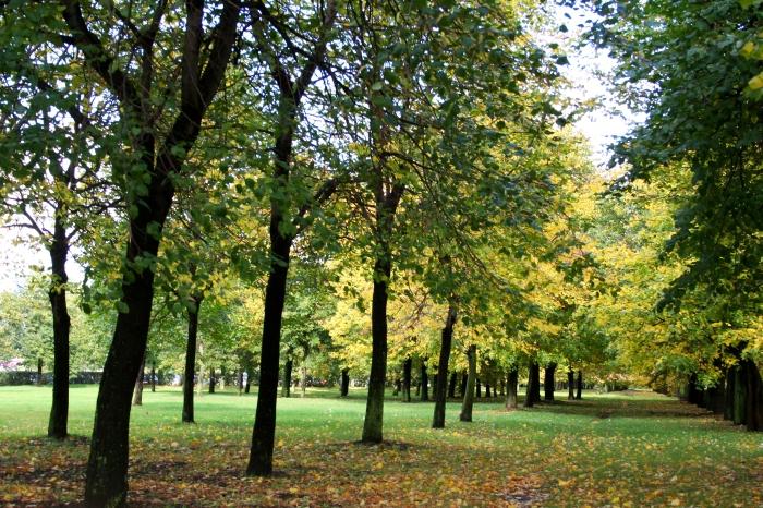 Парк имени 60-летия Октября