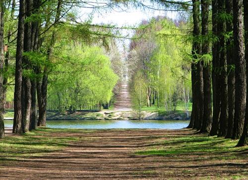 Тимирязевский парк