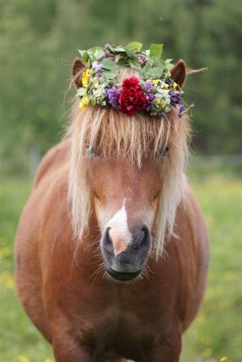 Лошадка в венке